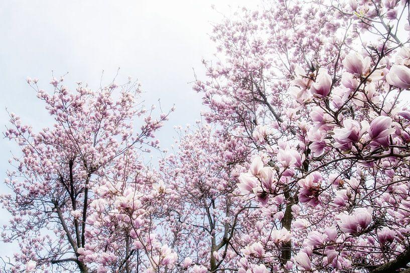 Magnoliabloesem lentebloesem III van Jessica Berendsen
