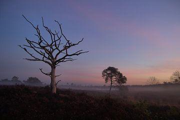 Eenzame boom op de Malpie van Jeroen Grit