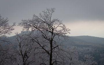 Le Grand Feldberg sur le Taunus sur Freedom Streaming Photography