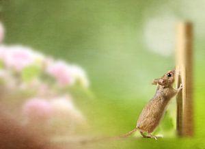 Neugierige Maus von Heike Hultsch