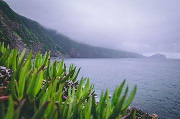 neblige Landschaft Azoren von Isai Meekers