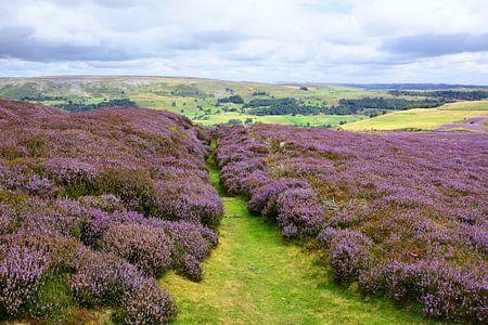 Yorkshire Moorland