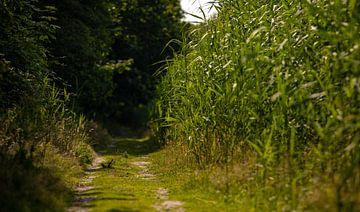 Wandelpad door het bos van Percy's fotografie