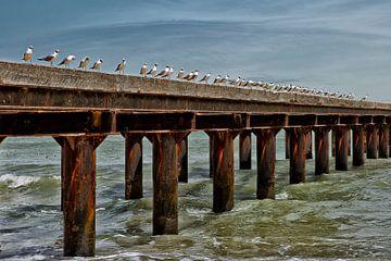 The birds. van Wilma  Wijers Smeets