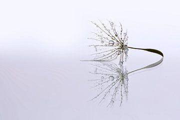 Dandelion Art - Druppel reflectie van Brigitte van Krimpen