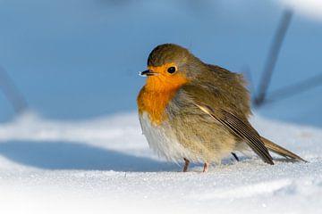 Roodborstje in de sneeuw van Diantha Risiglione