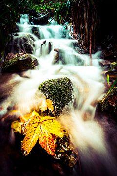 Geel herfst blad in een waterval bij Winterberg van Björn Jeurgens