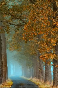 Schwindendes Licht von Lars van de Goor