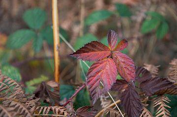 herfstkleuren van Eugene Lentjes