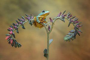 Mooie kikker aan het relaxen van