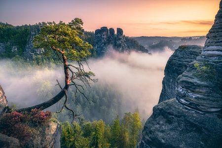 Pölking Pine (Felsenburg Rathen bij de Bastei) van Dirk Wiemer