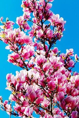 Magnolia popart