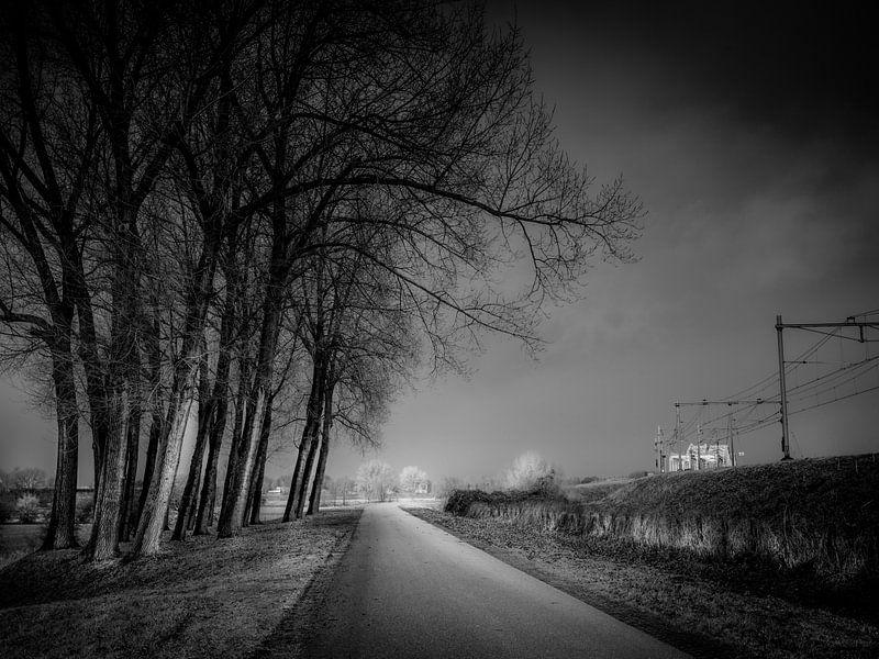 Between tracks and trees van Ruud Peters
