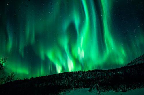 Northern Lights dancing van