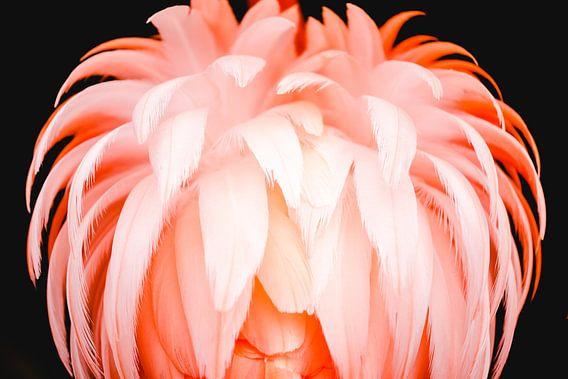 Flamingo van Steven Hendrix