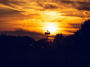 Ooievaar bij zonsondergang van Jasper van der Vos