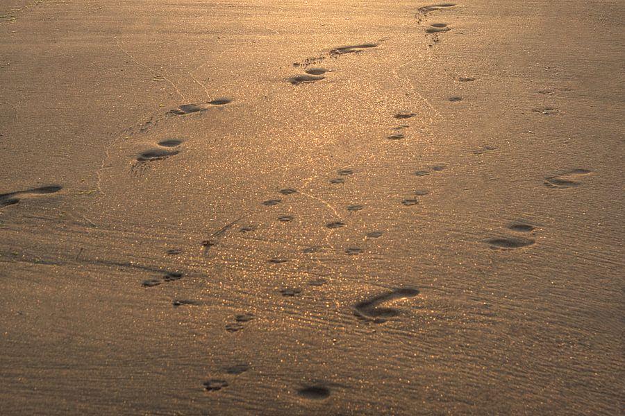 Sporen in het zand van MSP Photographics