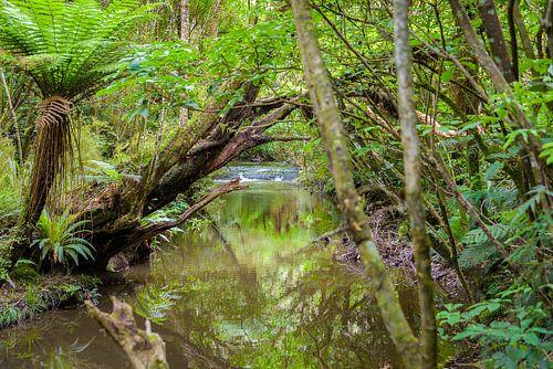 Beekje met stroomversnelling in het regenwoud, Nieuw Zeeland
