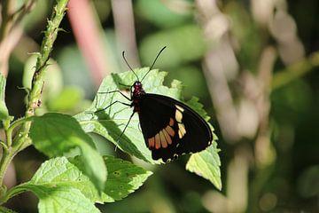 Vlinder von Berg Photostore