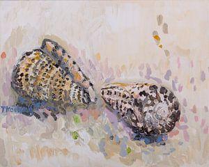 Stilleven met schelpen 2 (Conus)