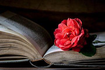 Buch &Ampel; Rose schließen von Simone Karis