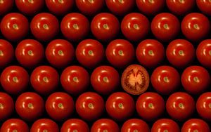 Rode tomaten van
