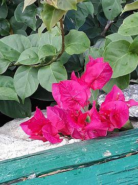 Hardroze bloemen van Renee Alexandra Serlier