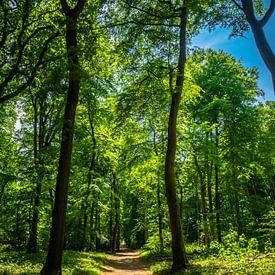 Waldweg von Martijn Tilroe