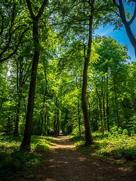 Chemin forestier sur Martijn Tilroe