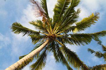 Onder de palmboom van Jolanda van Eek