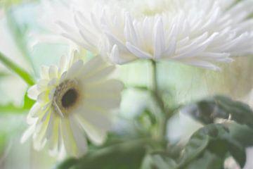 Astra en Gerbera bloem van Marianna Pobedimova