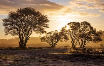 Goldener Sonnenaufgang Zuiderheide