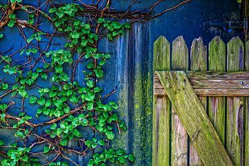 Oude Poort van Geheime Tuin in het Voorjaar de Klimhortensia geeft al blad. Achtergrond blauw grijs van ellenilli .