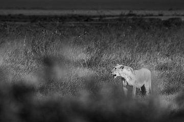 Kenia | White Mountain Movement 8 von Mariëlle de Valk