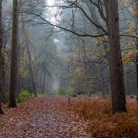 Herfst in het Peerdsbos van Bruno Hermans
