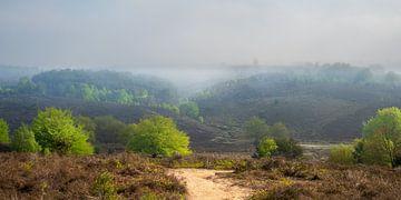 Misty morning van John Goossens Photography