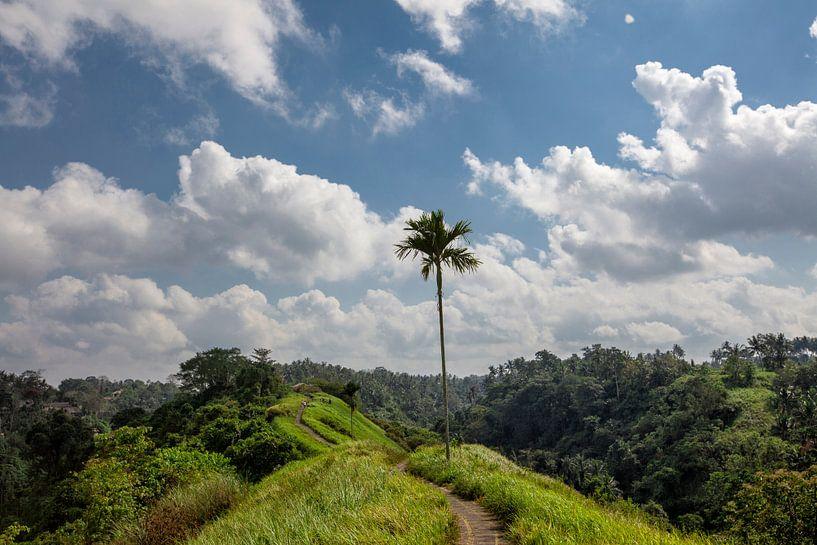 Geweldig groen rijstveld. Ubud, Bali, Indonesië van Tjeerd Kruse