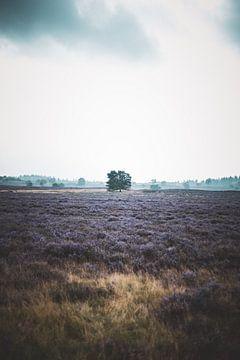Heide van Epe van S van Wezep