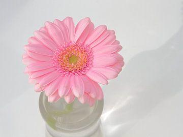 Gerbera roze van Ronald Smits