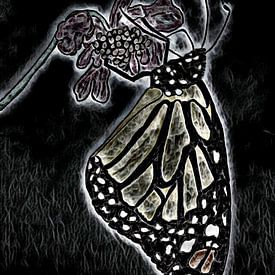 Monarchvlinder. van Jose Lok