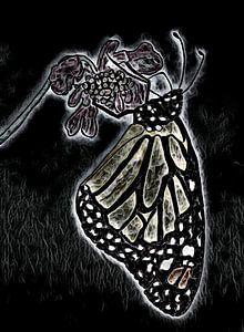 Monarchfalter.