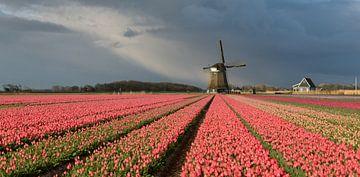 Molen met roze tulpen onder een bewolkte hemel van iPics Photography