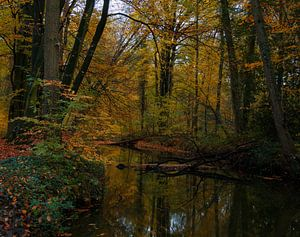 Het bos nabij Winterswijk van