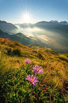 Bloemrijke blik in het dal van de Silsersee en het omliggende berglandschap van Leo Schindzielorz