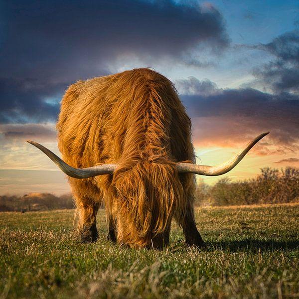 Mijn favoriete Schotse Hooglander / Higlander II van Wim van Beelen