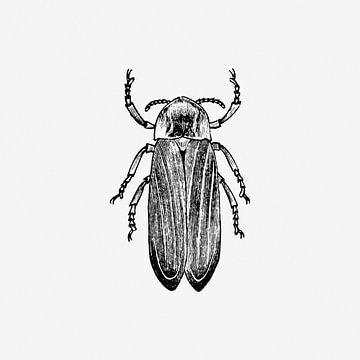 The bug van Love Roest