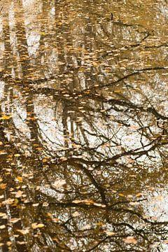 Herfstspiegeling van Birgitte Bergman