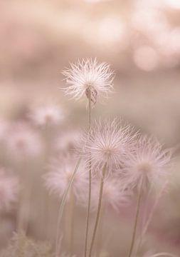 Blumen Teil 142 von Tania Perneel