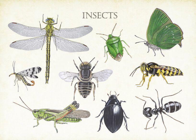 Insekten von Jasper de Ruiter