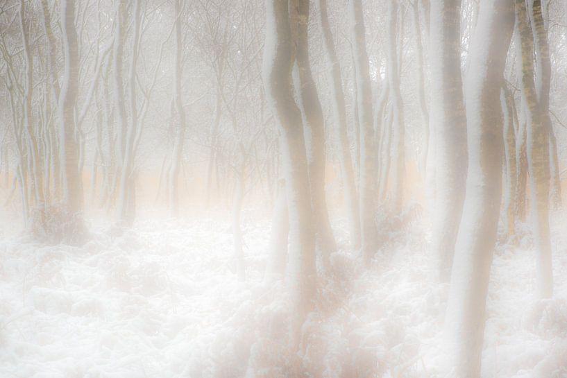 winterdroom van jowan iven